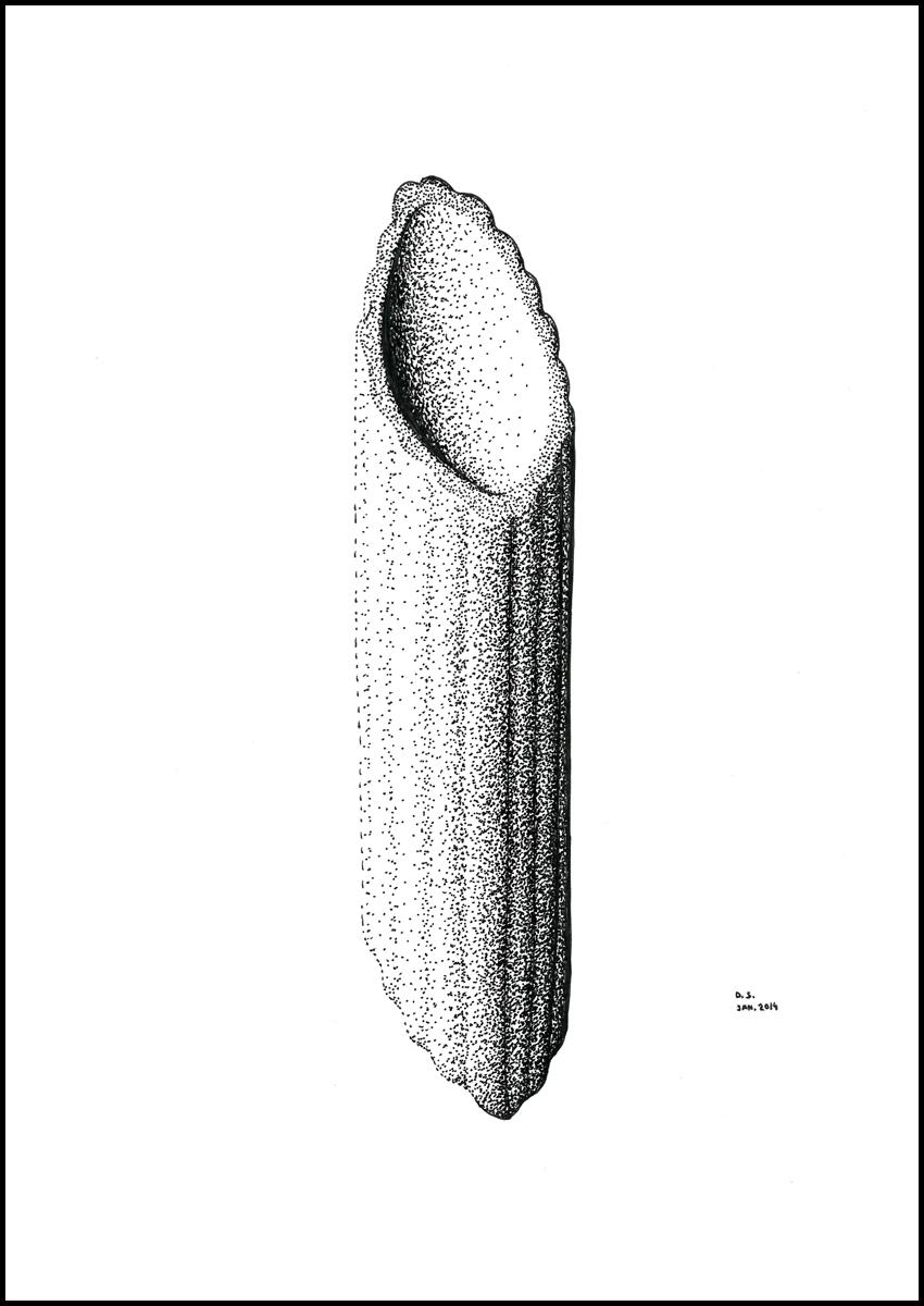 drawing_pasta_02